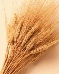 Naturprodukter mot t.ex. glutenallergi